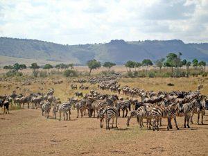 Ngorongoro - Kazuri Safaris