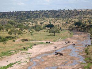 Tarangire - Kazuri Safaris