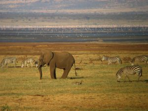 Lake Manyara - Kazuri Safaris