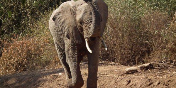 Tanzania-Kazuri-Safaris (143)