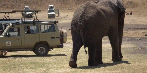 Tanzania-Kazuri-Safaris (144)