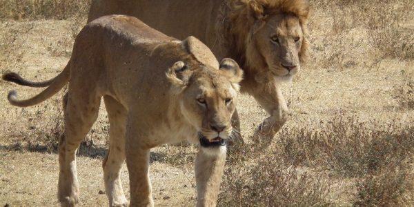 Tanzania-Kazuri-Safaris (145)
