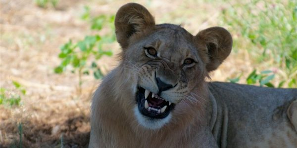 Tanzania-Kazuri-Safaris (16)