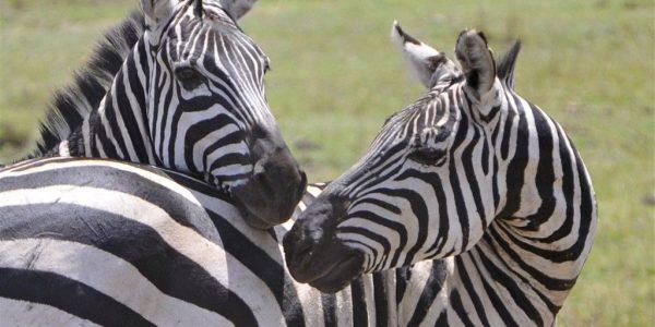 Tanzania-Kazuri-Safaris (167)