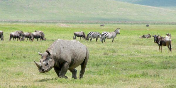 Tanzania-Kazuri-Safaris (25)