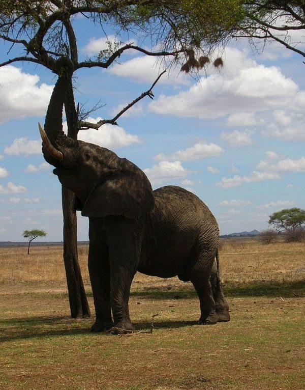 Kazuri Safaris - Tarangire