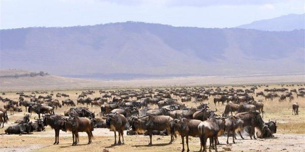 Tanzania-Kazuri-Safaris (45)