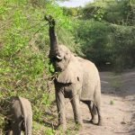 Tanzania-Kazuri-Safaris