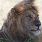 Tanzania Hoogtepunten - 7 dagen