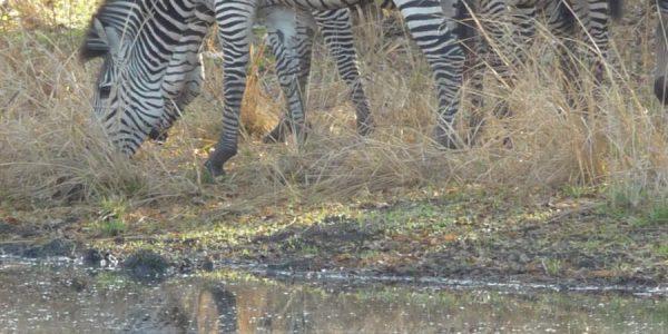 zambia-kazuri-safaris-39