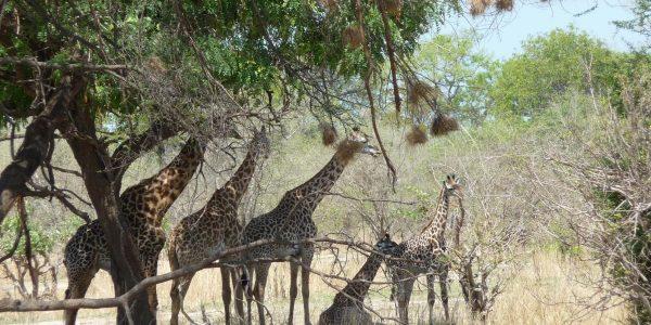 zambia-kazuri-safaris-45