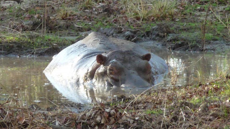 Kazuri Safaris - Zambia