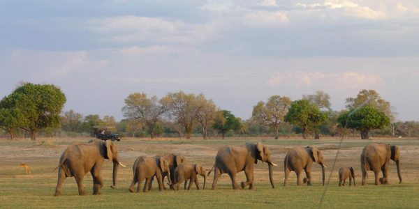 zambia-kazuri-safaris-61