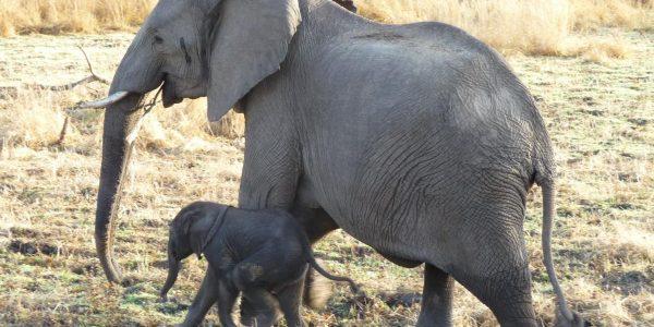 zambia-kazuri-safaris-64