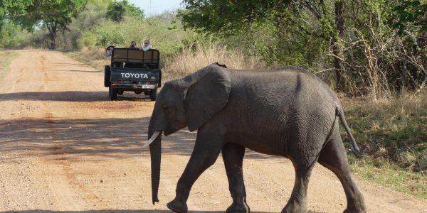 zambia-kazuri-safaris-69