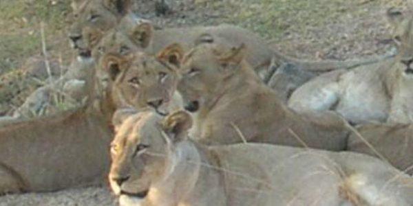 zambia-kazuri-safaris
