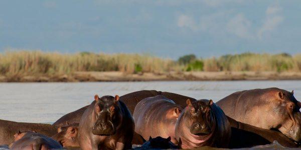 zuid-tanzania-kazuri-safaris-joni-1